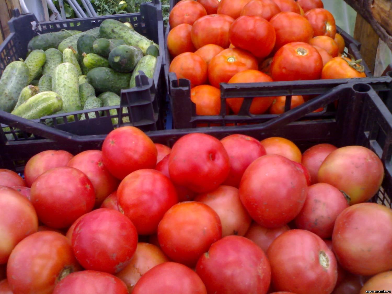 Семена томатов в проф упаковке